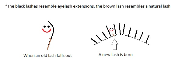 LashGrowthCycle - The Most Common Misconceptions about Eyelash Extensions